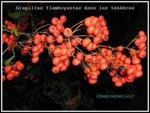 grappilles orange