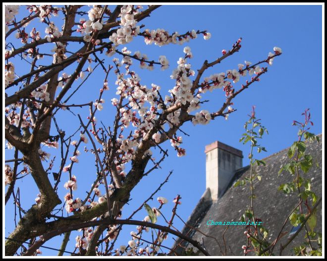 printemps 11 IMG_8242